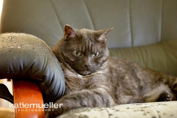 albertville, mn cat photographer
