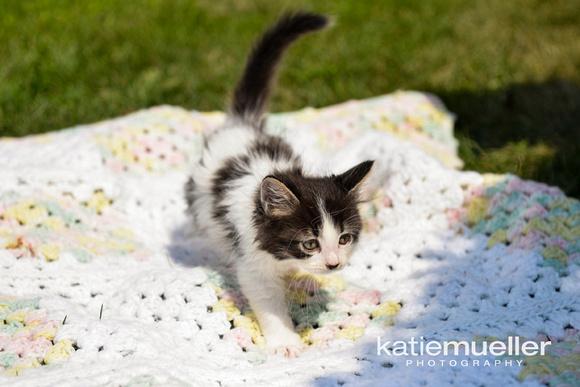 Maple Grove, mn cat photographer
