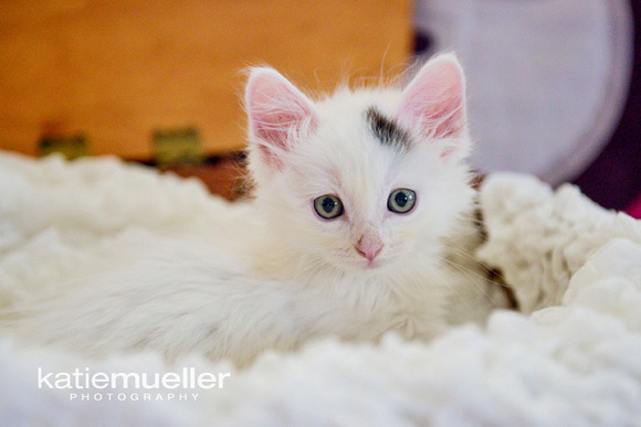 rogers, mn cat photographer
