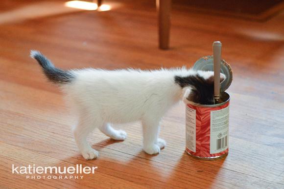 minneapolis, mn cat photographer